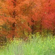 Autumn 3 - 16oct2016 Art Print