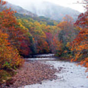 Autumn Along Williams River Art Print by Thomas R Fletcher