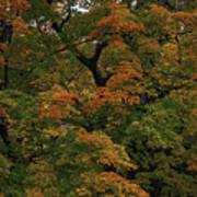 Autumn Arrives Art Print
