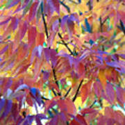 Autumn Ash Tree 1 Art Print