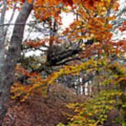 Autumn At Beech Forest Art Print