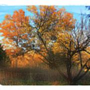 Autumn At Bull Run Art Print