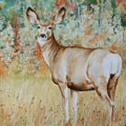 Autumn Beauty- Mule Deer Doe  Art Print