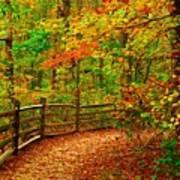 Autumn Bend - Allaire State Park Art Print