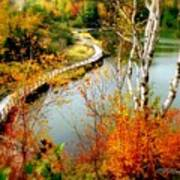 Autumn Birch Lake Boardwalk Art Print