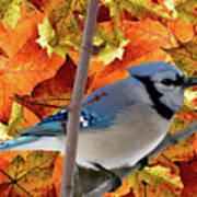 Autumn Blue Jay Art Print by Debra     Vatalaro