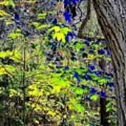 Autumn Blue  Art Print