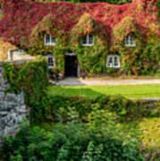 Autumn Brilliance Art Print
