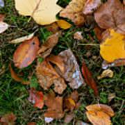 Autumn Carpet 001 Art Print
