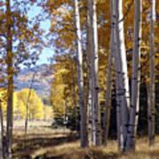 Autumn Chama New Mexico Art Print
