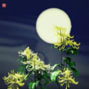 Autumn Chrysanthemums 2 Art Print