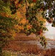 Autumn Colors 37 Art Print