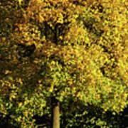 Autumn Colors 8 Art Print