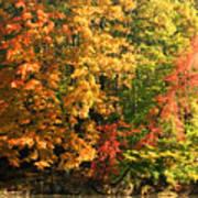 Autumn Colors II Art Print