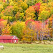 Autumn Colors Near Lake Ainslie  Art Print