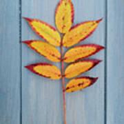 Autumn Colours On Blue Art Print