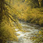 Autumn Creek Art Print