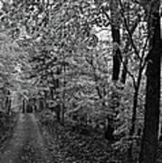 Autumn Drive Bnw Art Print