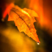 Autumn Drops Art Print
