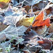 Autumn Ends, Winter Begins 3 Art Print