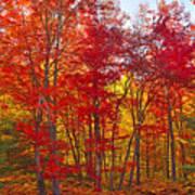 Autumn Experience Art Print