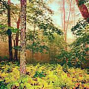 Autumn Fall Colors - Brilliant Ferns In The Blue Ridge Ap Art Print
