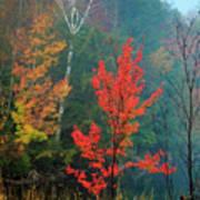 Autumn Fire Art Print
