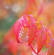 Autumn Fires Art Print
