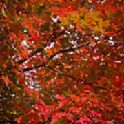 Autumn Foliage-1 Art Print