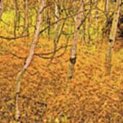 Autumn Foliage Lc Art Print