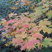 Autumn Foliage Art Print