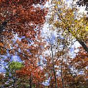 Autumn Forest Canopy Art Print