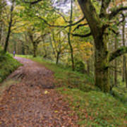 Autumn Forest Path - Art Print