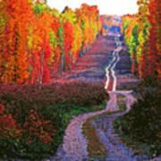 Autumn Forest Track Art Print