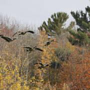 Autumn Geese Art Print