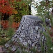 Autumn Gone-by Art Print