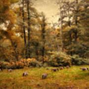 Autumn Grazing Art Print