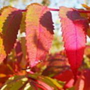 Autumn Has Arrived Art Print