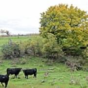 Autumn Herd Art Print