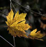 Autumn Highlight Art Print