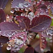autumn Huckleberry leaves macro in autumn Art Print by Ed Book