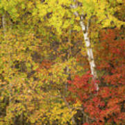 Autumn Impressions Art Print