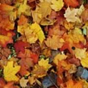 Autumn In Canada Art Print
