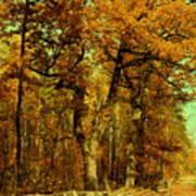 Autumn In Forest Art Print