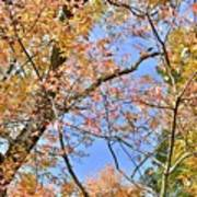 Autumn In Full Swing Art Print