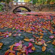 Autumn In New England Art Print