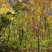 Autumn In Schooley's Mountain Park 2 Art Print
