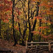 Autumn In The Rambles Art Print