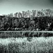 Autumn In The Wetlands - Black And White Art Print