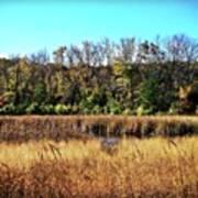 Autumn In The Wetlands Art Print